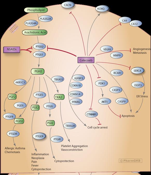 Celecoxib Pathway, Pharmacodynamics